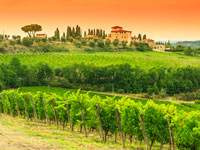 Private Chianti Half Day Tour with Wine Tasting in a Historical Wine Estate 9:00AM from Florence